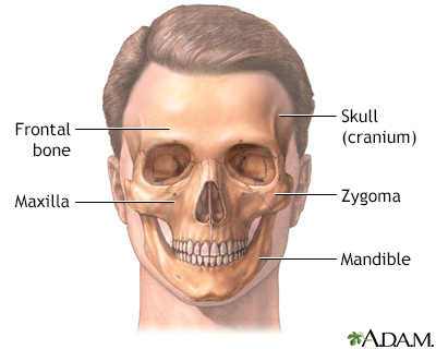 Head And Face Reconstruction Adam Interactive Anatomy