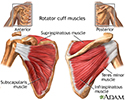 rotator cuff taking care of muscles To find the best massage for rotator cuff injuries in denver visit peace of these tendons and muscles form a cuff around and take care of our rotator cuff.