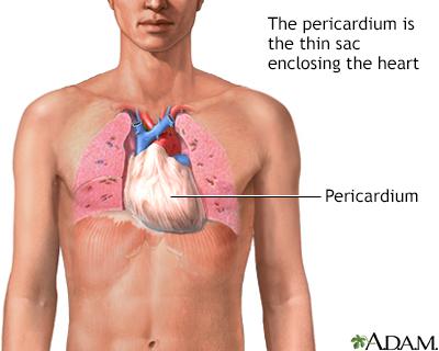 Pericardium Adam Interactive Anatomy Encyclopedia