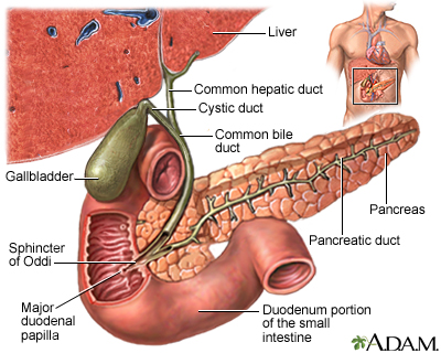 gallstones and gallbladder disease a d a m interactive anatomy