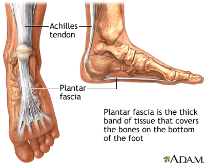 arches of foot anatomy