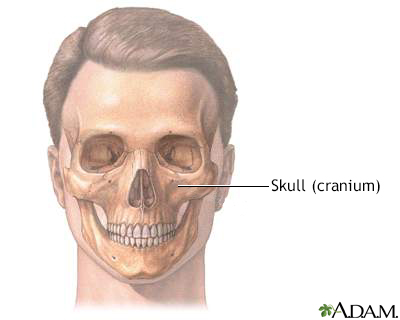 Skull - A.D.A.M. Interactive Anatomy - Encyclopedia