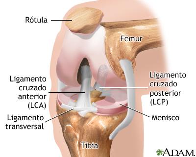 Artroscopia de rodilla - A.D.A.M. Interactive Anatomy - Encyclopedia